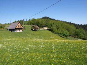 Hasenhof Wolfach St. Roman Ferienwohnungen Urlaub Startseite